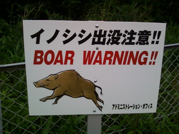 Boar warning sign close-up